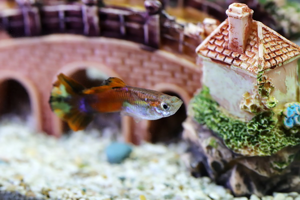 Aquariums and Fish Bowls