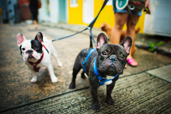 Dog Harnesses & Muzzles
