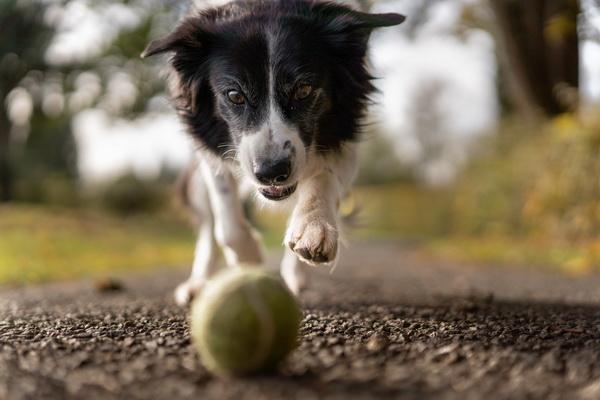 Dog Toys & Treats